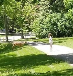 picnic deer 2